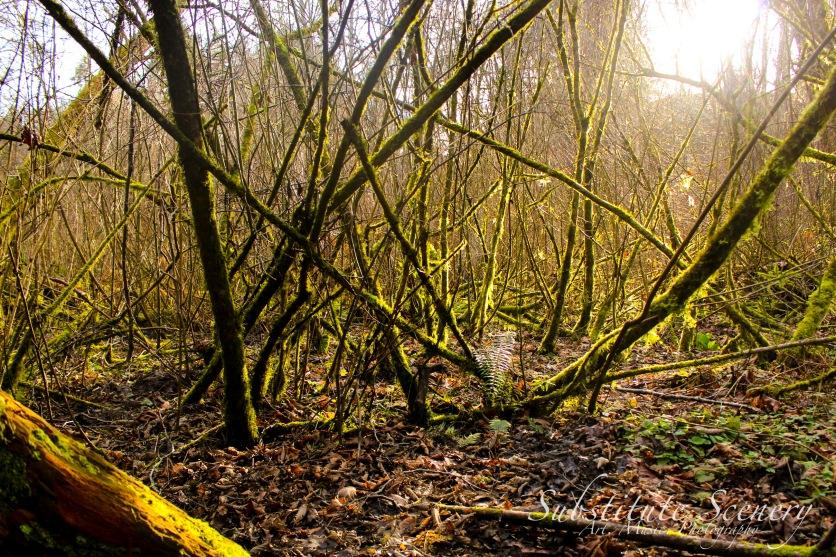 Glow Woods