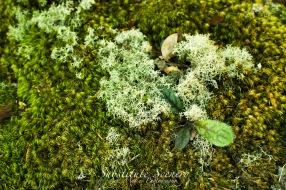 Tiny Ecosystems